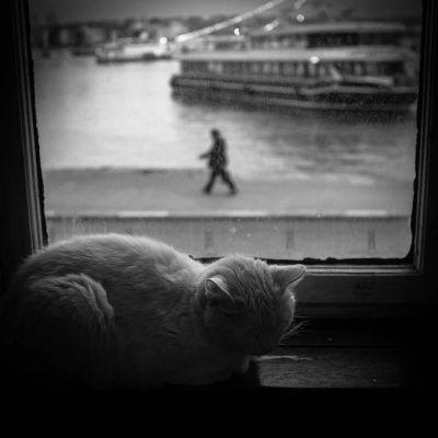 Istanbul – The Inner Battle